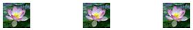 lotus flower bar